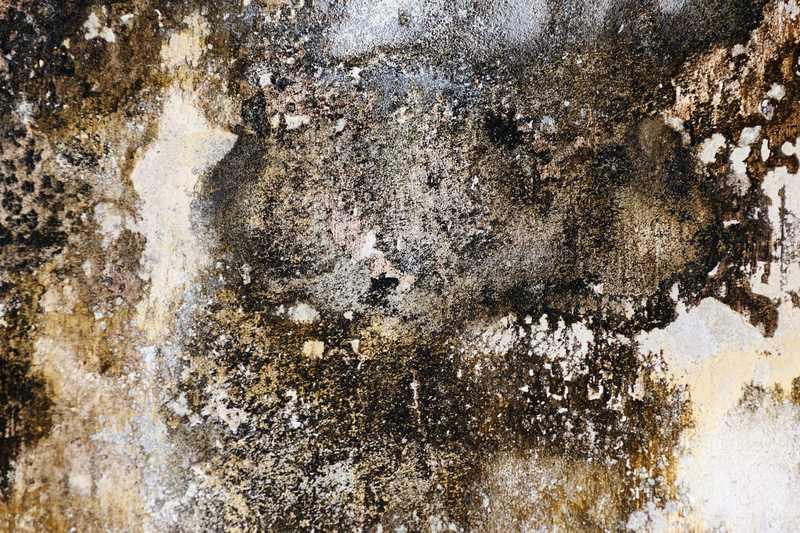 mold damage insurance claim